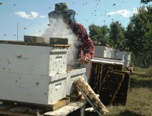 Как можно стать пчеловодом?