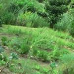 Дарение доли земельного участка