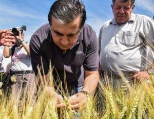 Ревизия земель