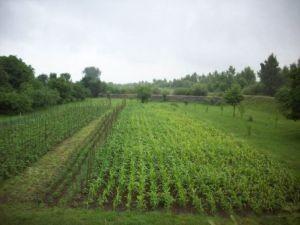 Распоряжение земельным участком